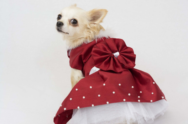 Wish | Red And White Elegant Dog Dress Handmade Puppy Yorkie Chihuahua Dog  Clothes Puppy Closet