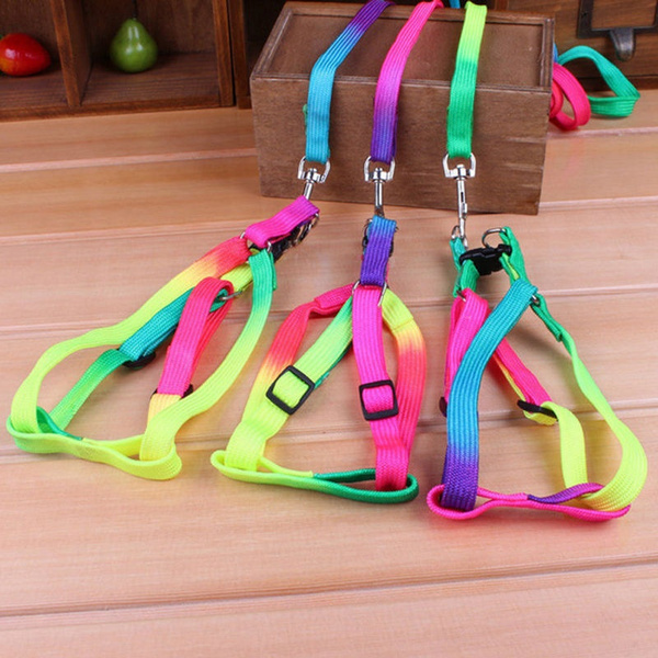 Harness, nylondogrope, Fashion, catrope
