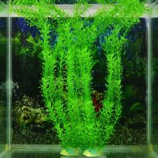 aquariumdecor, Plants, Tank, fish