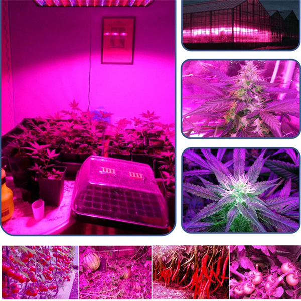 Wish Excelvan 45w 225 Led Plant Growing Lamp Greenhouse Indoor Gardening Hydroponic Full Spectrum Light Fixtures Perfect For Flowers