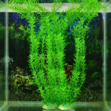 Plants, Tank, Home Decor, Home & Living