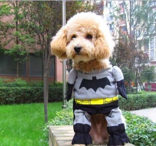 Wish | New Cute Pet Cat Dog Batman Costume Suit Puppy Clothes Superhero Outfit Apparel Clothing for Small dogs & Wish | New Cute Pet Cat Dog Batman Costume Suit Puppy Clothes ...