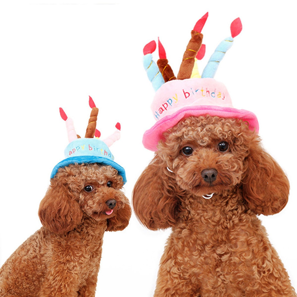 Phenomenal 2016 Latest Happy Birthday Pet Dog Cat Hat With Cake Candles Funny Birthday Cards Online Aeocydamsfinfo