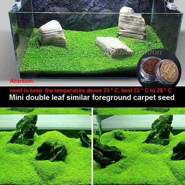 aquarium tank mini double leaf similar foreground carpet water plants seed
