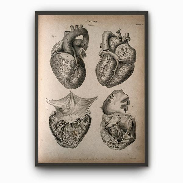 Wish | Not Framed Heart Anatomy Art Poster Vintage Heart Book Plate ...