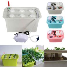 Box, pink, Plants, airbubbletube