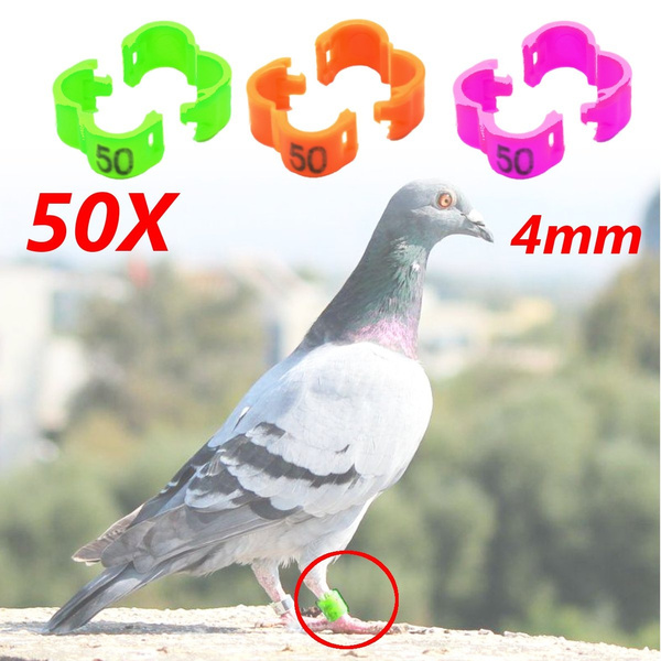 4mm 1-50 Numbered Bird Ring Leg Bands For Parrot Chicken Finch Canary  Grouped Clip Snap