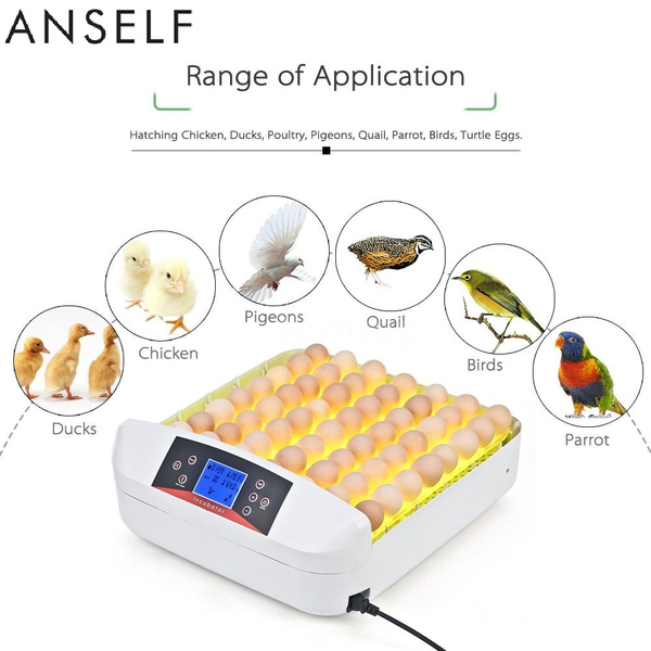 Anself 56 Eggs All-In-One Intelligent Full-automatic Egg Incubator Hatcher  Transparent Eggs Hatching Machine for Chicken Duck Pigeons Quail Parrot