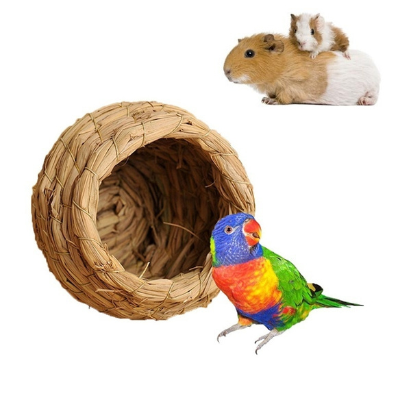 cave, Parrot, straw, house