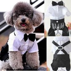 Medium, doggentlemancloth, puppy, Bow