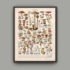 canvasprint, art, Mushroom, wallpicture