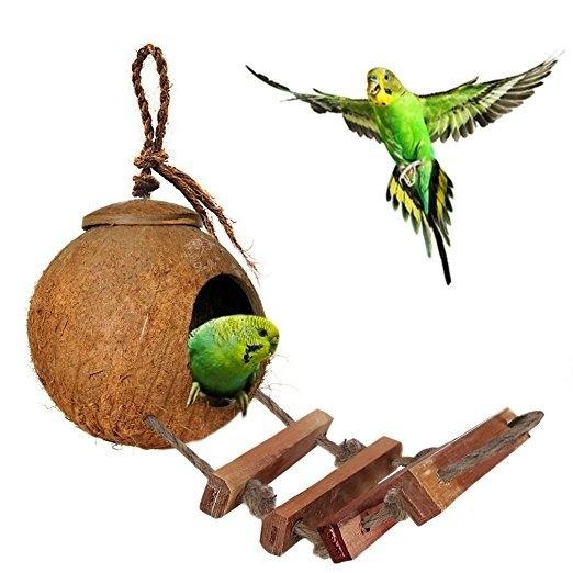 birdstoy, Toy, petaccessorie, Parrot