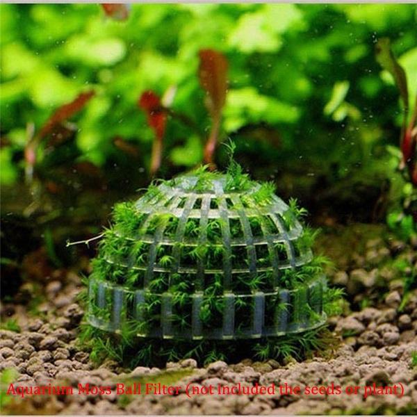 fishaquarium, aquariumplant, aquariumsampaccessorie, liveplant
