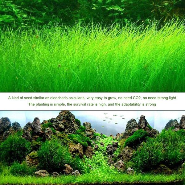 Wish | Aquarium Home Garden Mini Double Leaf Similar Foreground Landscaping  Water Plants Fish Tank Decor
