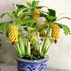Exotic, Mini, dwarfbananatreeseed, Garden