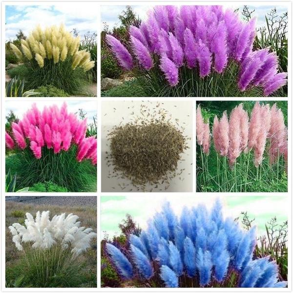 pink, ornamental, Plants, Flowers
