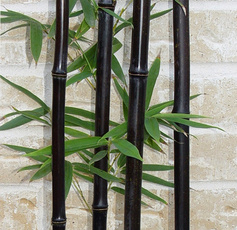 Bonsai, Gardening, bonsaipot, easterday