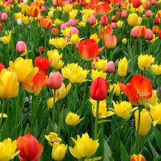 flowerpotsplanter, Bonsai, Flowers, gardenpottedseed