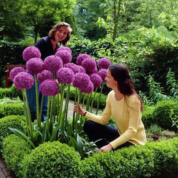 Beautiful, Plants, Flowers, Garden