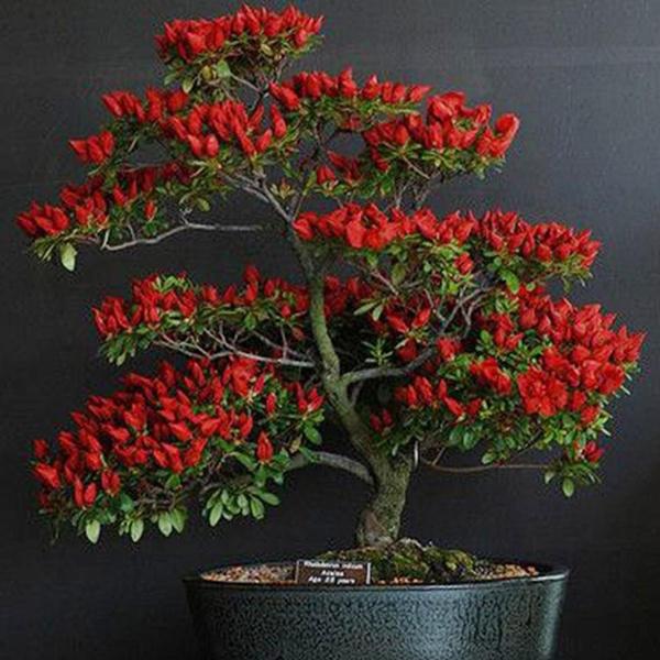 bonsaipotplant, Bonsai, pepper, Home Decor