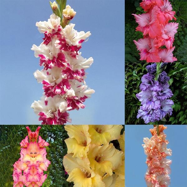 Plants, Flowers, Garden, perennialseed