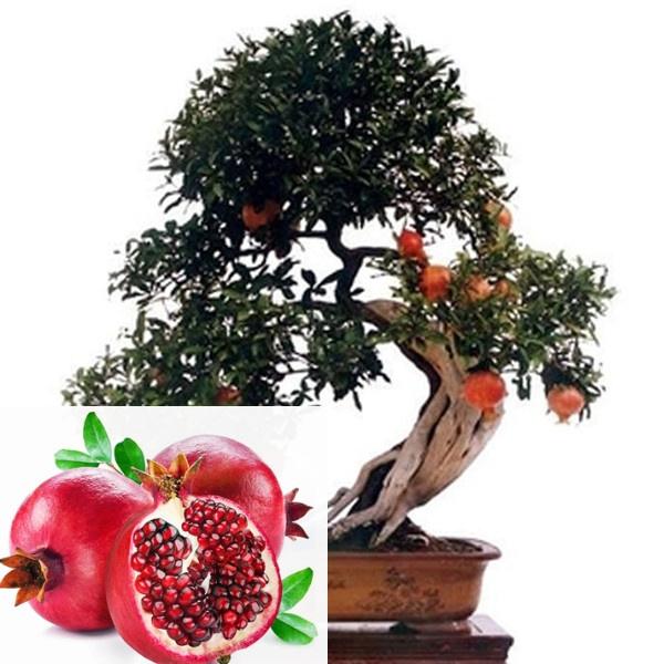 Bonsai, Plants, Yard, pomegranateseed