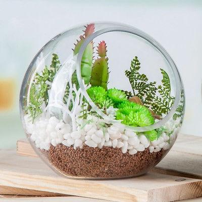 Plants, Flowers, useful, Glass