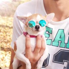 dogtoy, Fashion, dogsunglasse, Pet Products