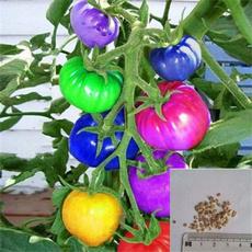 tomato, Bonsai, Plants, tomatoseed