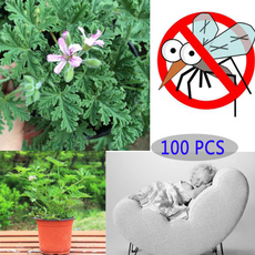 Plants, herbseed, grassplantingpot, gardenplant