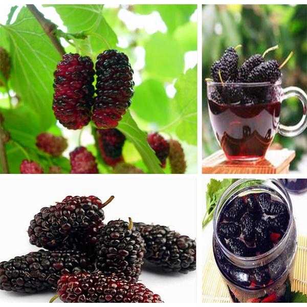 200pcs Mulberry Seeds Sweet Black Berry Giant Plants Miracle Fruit Seed Rare Tree Bonsai Garden Bush Diy Home Garden
