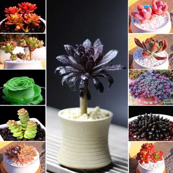 succulent, Plants, seedssucculent, Home Decor