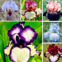 100pcs Bell Orchid Flower Seeds Convallaria Seeds Bonsai Flowers Seeds ILOE