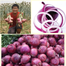 onionseed, Home Supplies, flowerpotsplant, alliumcepaseed
