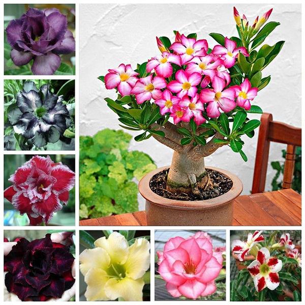 Bonsai, pink, gardenseed, Flowers