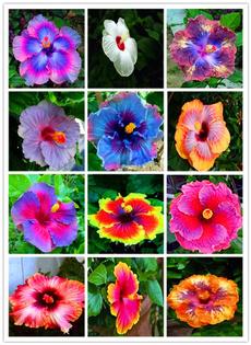 Bonsai, Beautiful, Decor, Flowers