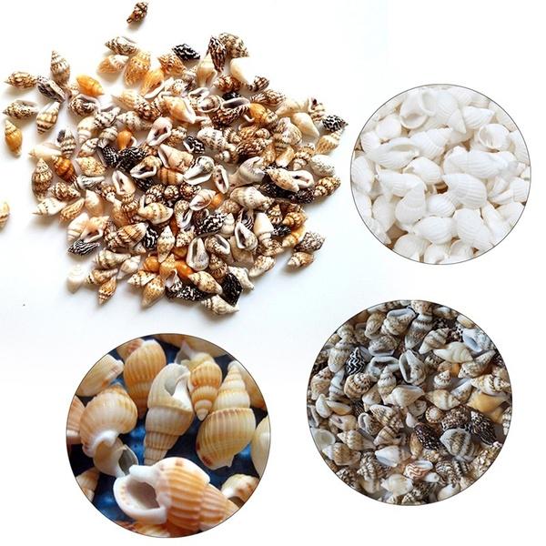 Decor, shells, aquariums, Home Decor