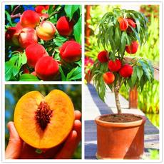 Bonsai, Plants, Garden, peach