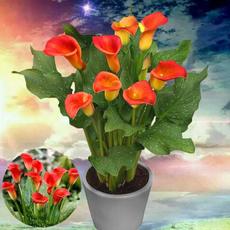 Bonsai, callalily, Flowers, Beautiful