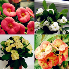 Bonsai, homemiliiseed, Home Supplies, flowerpotsplant