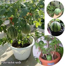 Plants, Garden, plantseed, seedsforgarden