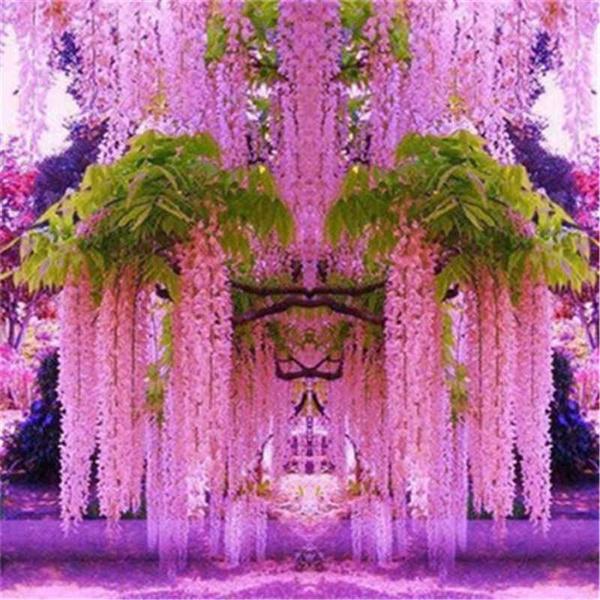 30pcs Purple Wisteria Flower Seeds Perennial Climbing Plants Bonsai Home Garden Wish