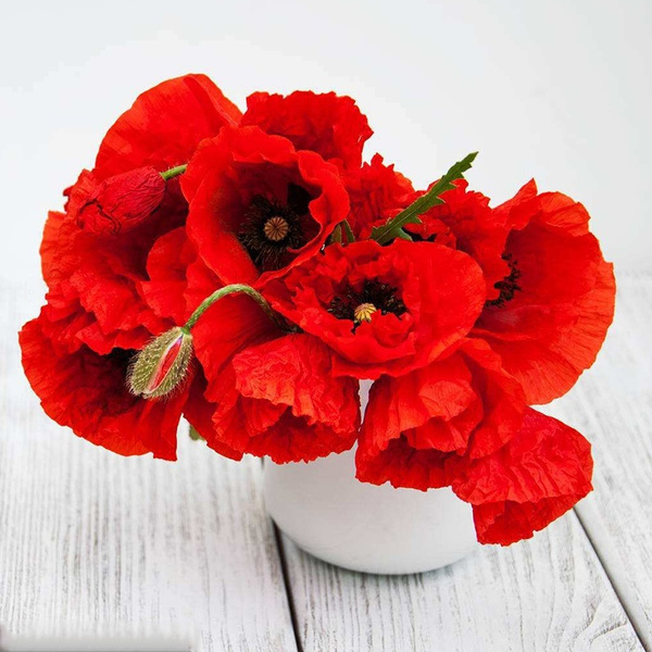 Wish home decoration poppy seeds spices opium seeds poppy plant wish home decoration poppy seeds spices opium seeds poppy plant flavoring enchanting red poppy flower seeds 10 colors 200pcs mightylinksfo