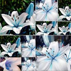 Bonsai, Blues, Plants, adornment