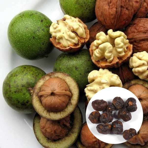 walnuttreeseed, gardenwalnuttreeseed, Home Supplies, flowerpotsplant