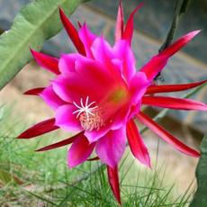 Beautiful, Bonsai, Home Supplies, flowerpotsplant