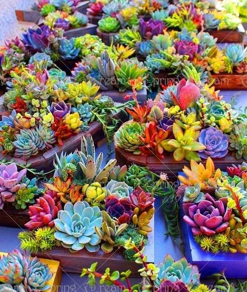 Bonsai, Mini, Flowers, Garden