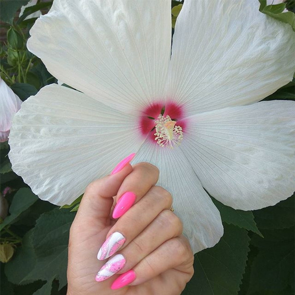 Rainbow Hibiscus Flower Seeds Plant Hibiscus Seeds Best Gift For