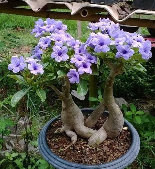 Plants, Flowers, rare, Garden