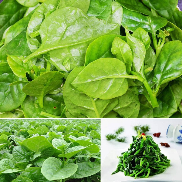 Bonsai, Plants, leaf, Gardening Supplies